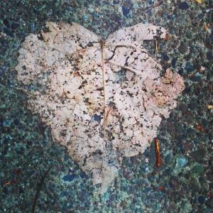 20150408 20150102 HeartLeaf6582